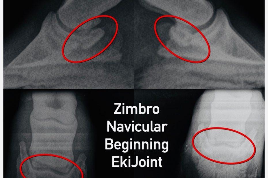 3-zimbro-xray-2-ekijoint